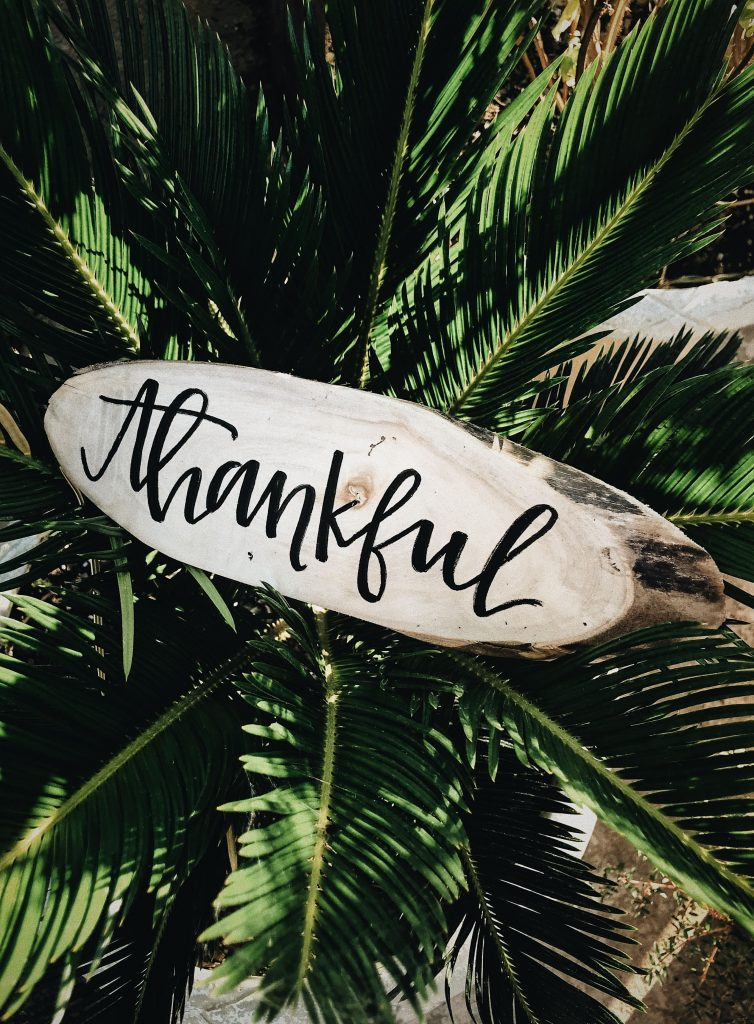 white board with 'thankful' written on it sitting in a palm tree